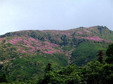ミヤマキリシマ20080612