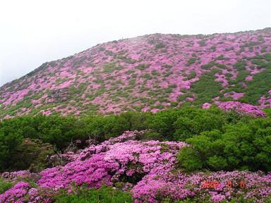 ミヤマキリシマ20090606_1