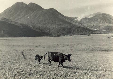 1950年代のタデ原湿原