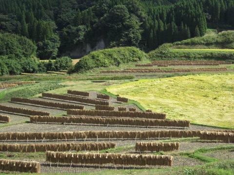 2010.09.27稲刈