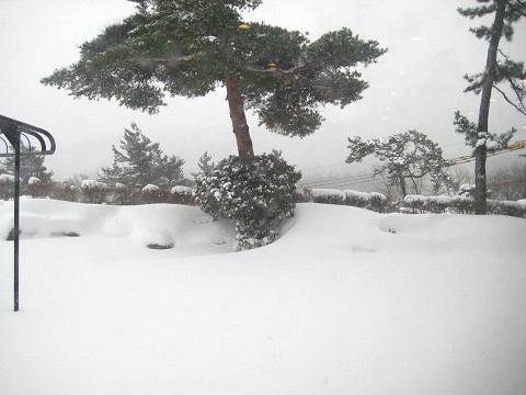 2010.12.31雪景色