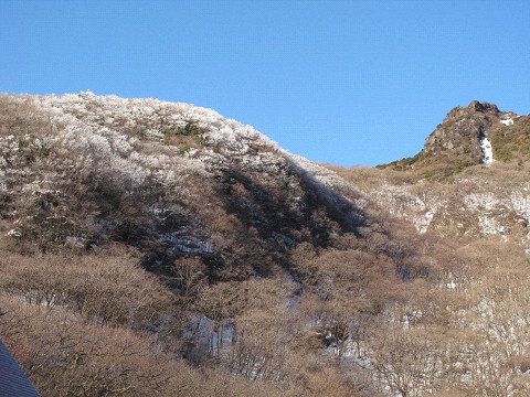 2011.02.19氷のさくら