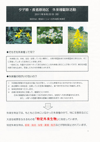 2011.08.24 特定外来植物駆除活動