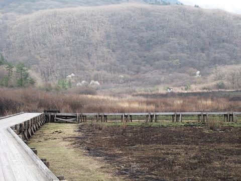 早春のタデ原湿原 2011.04.23