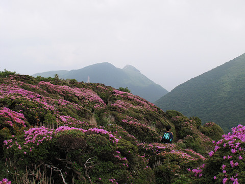 平治岳4 2011.6.13