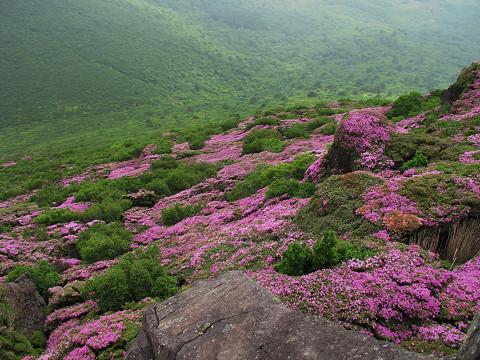 平治岳2 2011.6.13