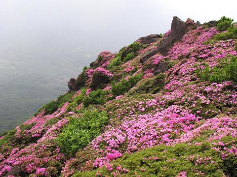 平治岳3 2011.6.13