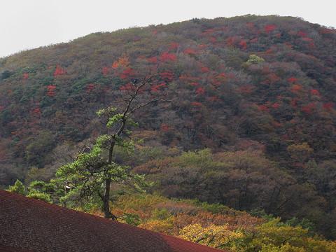 黒岩紅葉1 2011.10.24