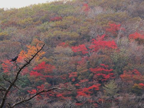 黒岩紅葉3 2011.10.24