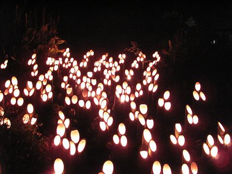 光ファンタジア2 2010.11.15