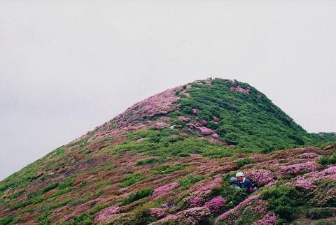 大船山ミヤマキリシマ