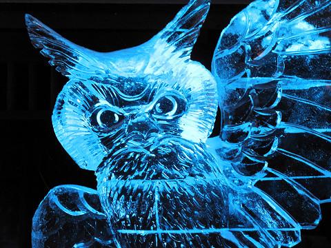 フクロウ2012