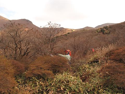 ノリウツギ伐採2012.11.12