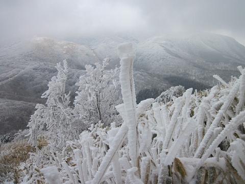 霧氷2013.1.18