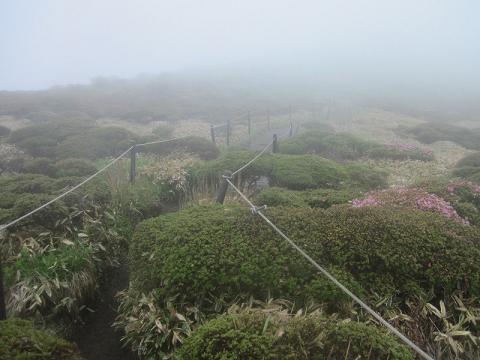 扇ケ鼻山頂付近2013.6.10